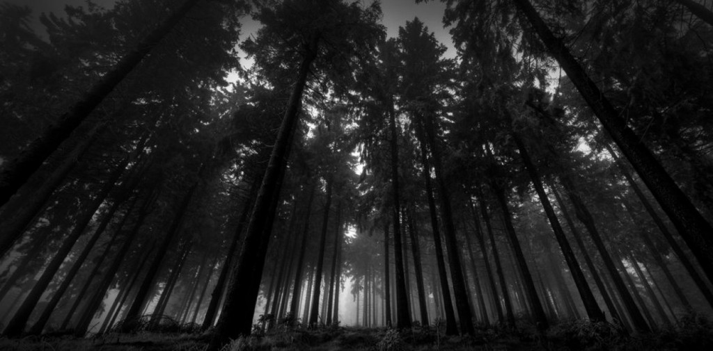 cropped-86288__in-the-dark-forest_p.jpg